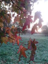 Herbstbaum3