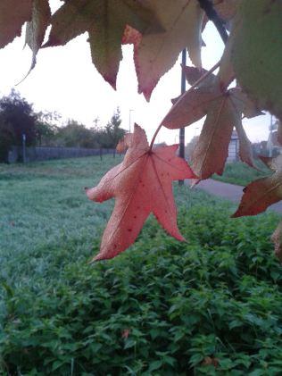 Herbstbaum4