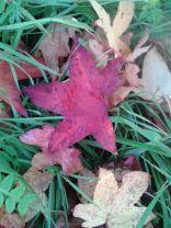 Herbstbaum5