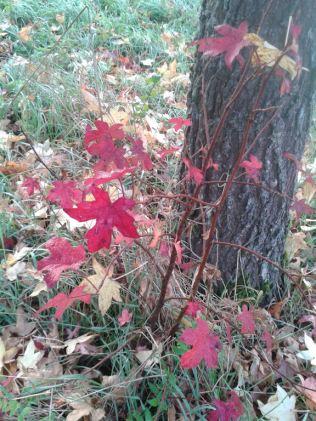 Herbstbaum6