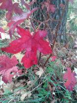 Herbstbaum9