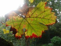 Herbstblatt1