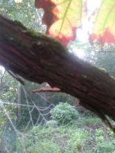 Herbstblatt2