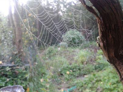 Spinnennetz2